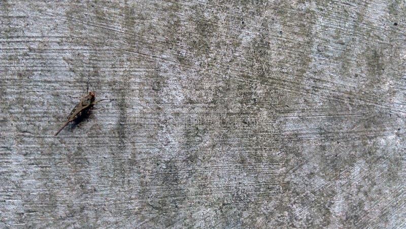 Uma outra espécie de gafanhoto em meu quintal imagem de stock