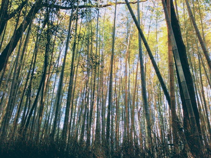 Uma outra vista do parque do bambu de Arashiyama fotografia de stock