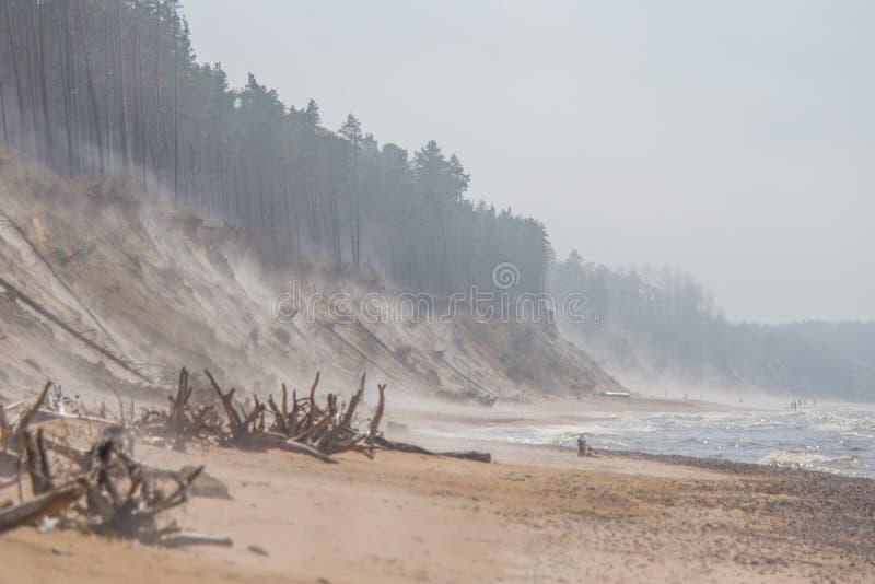 Uma paisagem bonita em um dia ventoso, areia de sopro da praia do vento até os penhascos arenosos altos Cenário da mola no mar fotos de stock royalty free