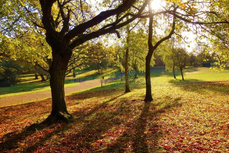 Uma paisagem colorida do outono imagem de stock royalty free