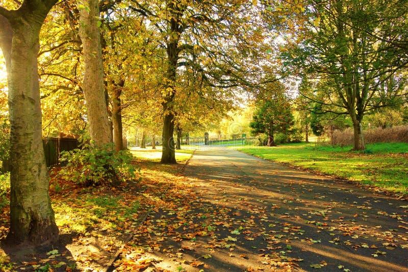 Uma paisagem colorida do outono imagens de stock royalty free