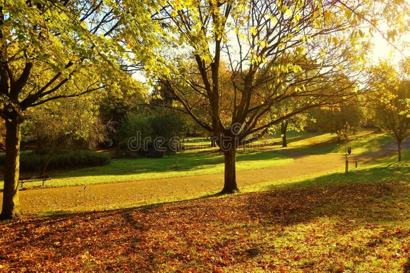 Uma paisagem colorida do outono foto de stock royalty free