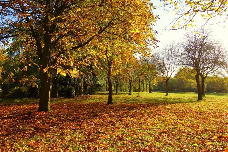 Uma paisagem colorida do outono foto de stock