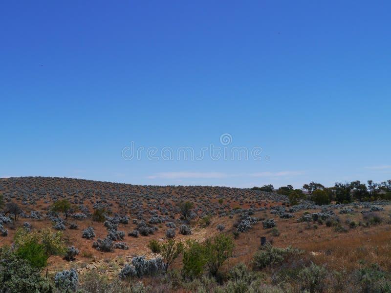 Uma paisagem com os arbustos do bleu da pérola imagem de stock royalty free