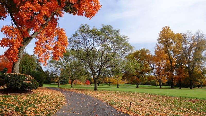Uma paisagem deliciosa do outono em Canadá, árvores vermelhas imagem de stock