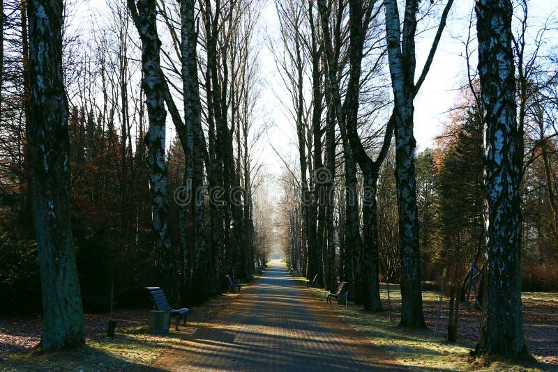 Uma paisagem enevoada do outono da manhã, uma aleia nevoenta do parque velho Grande aleia do parque da cidade do carvalho foto de stock royalty free