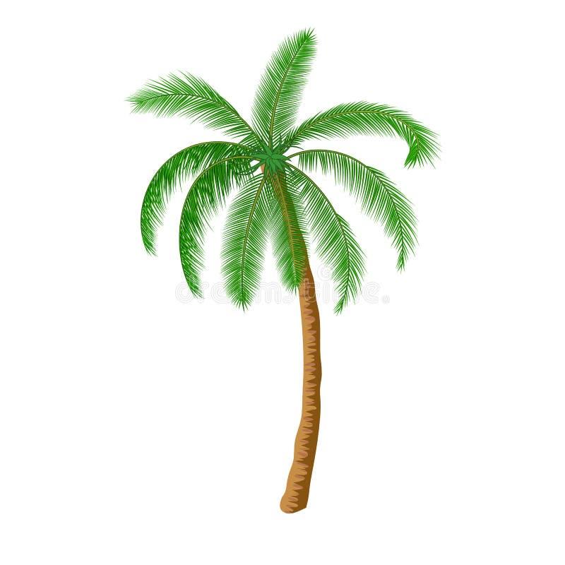 Uma palmeira ilustração do vetor