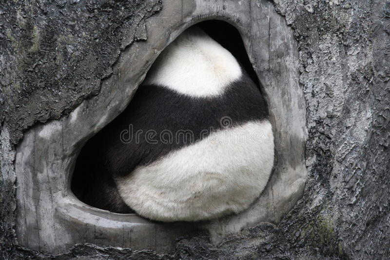 Uma panda macia imagens de stock royalty free