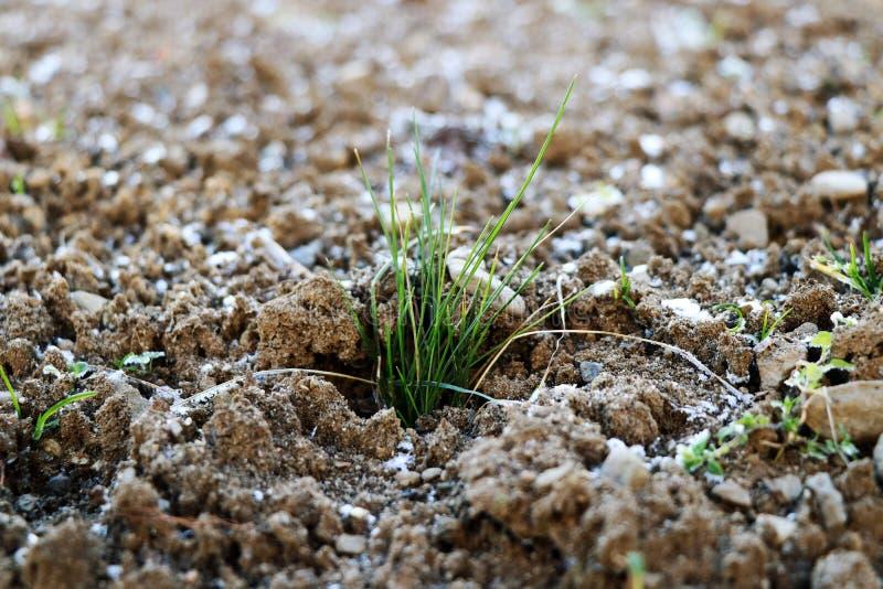 Uma parte de grama na terra congelada foto de stock