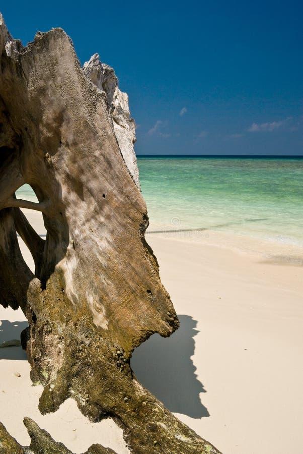 Uma parte de madeira na praia imagem de stock royalty free