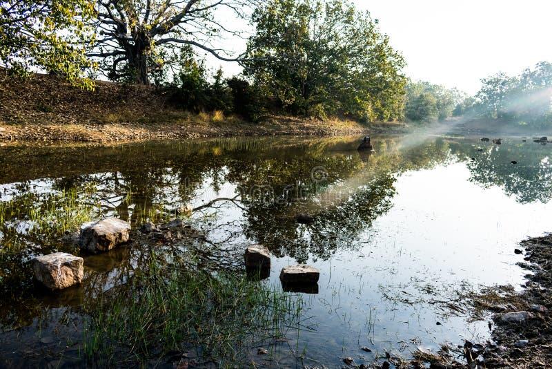 Uma pedra pequena na opinião da lagoa com sombra da árvore próximo da lagoa imagens de stock royalty free