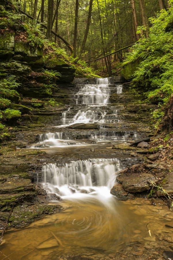 Uma pequena cachoeira ao longo de um riacho no Waterman Conservation Education Center, Apalachin, no estado de Nova Iorque fotografia de stock royalty free