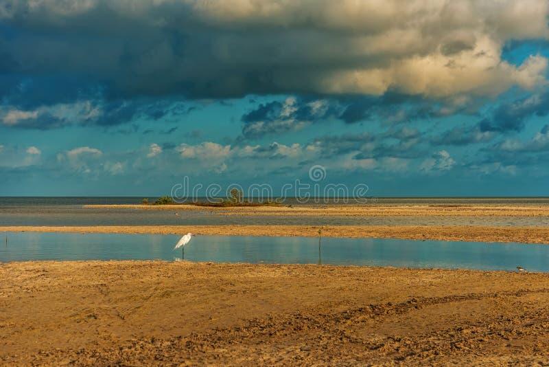 Uma pequena erva branca está parada na lagoa Egretta garzetta fotos de stock