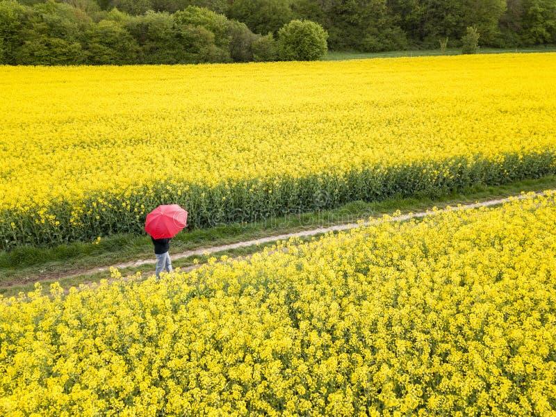 Uma pessoa com guarda-chuva vermelho que anda através do campo da violação foto de stock royalty free
