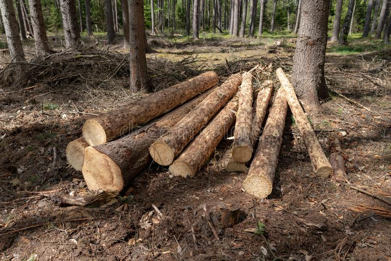 Uma pilha da madeira arranjou ao longo de uma estrada de floresta Madeira preparada para a exporta??o imagem de stock royalty free