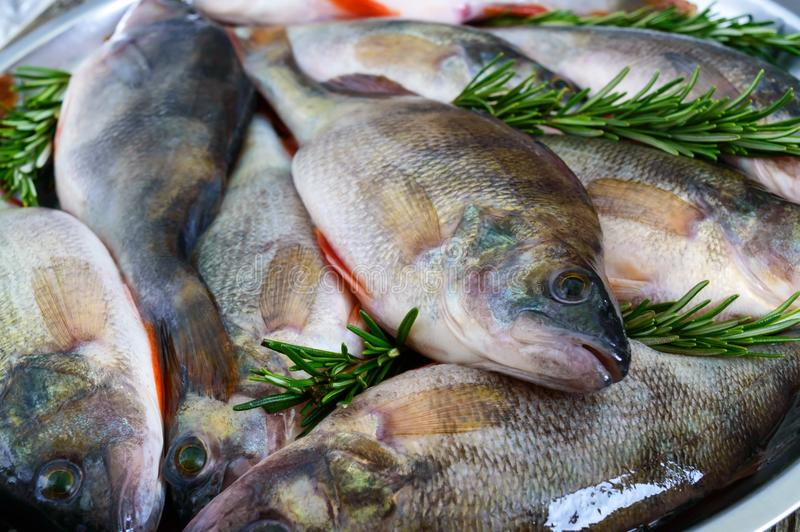 Uma pilha de peixes crus frescos em uma bandeja Close-up carpa imagens de stock royalty free