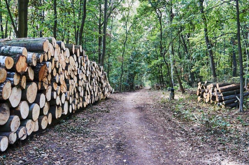 Uma pilha de troncos de árvore cortados e de Forest Road imagem de stock royalty free