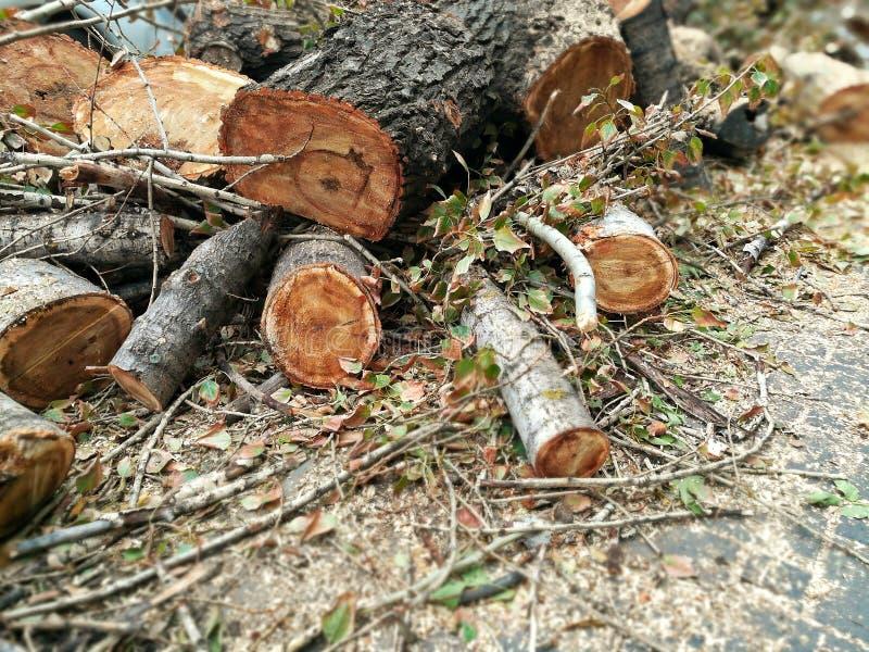 Uma pilha de troncos abatidos de árvores velhas fotos de stock