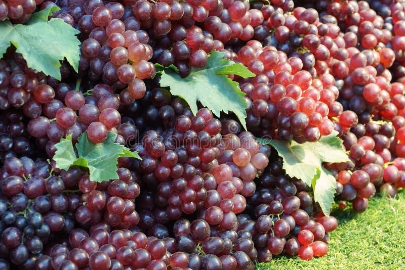 Uma pilha de uvas roxas fotos de stock