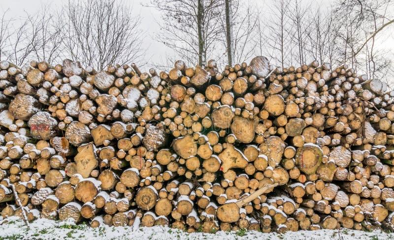 Uma pilha dos logs fotografia de stock royalty free