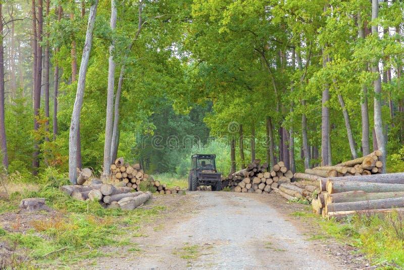 Uma pilha grande da madeira do log em uma estrada de floresta fotografia de stock