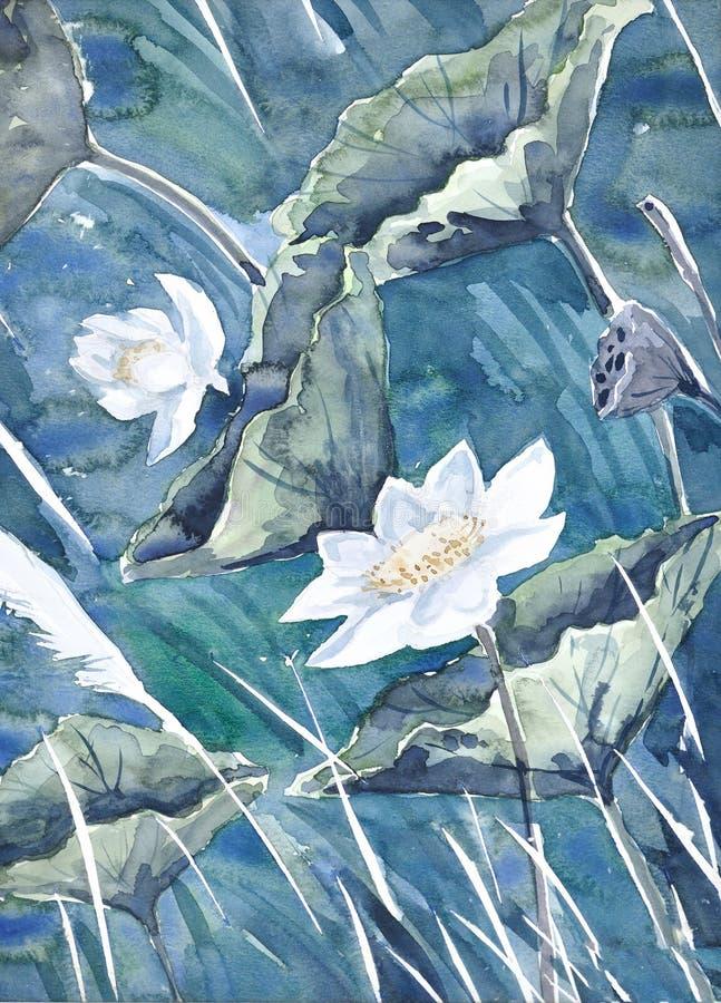 Uma pintura original da aguarela, lótus ilustração do vetor