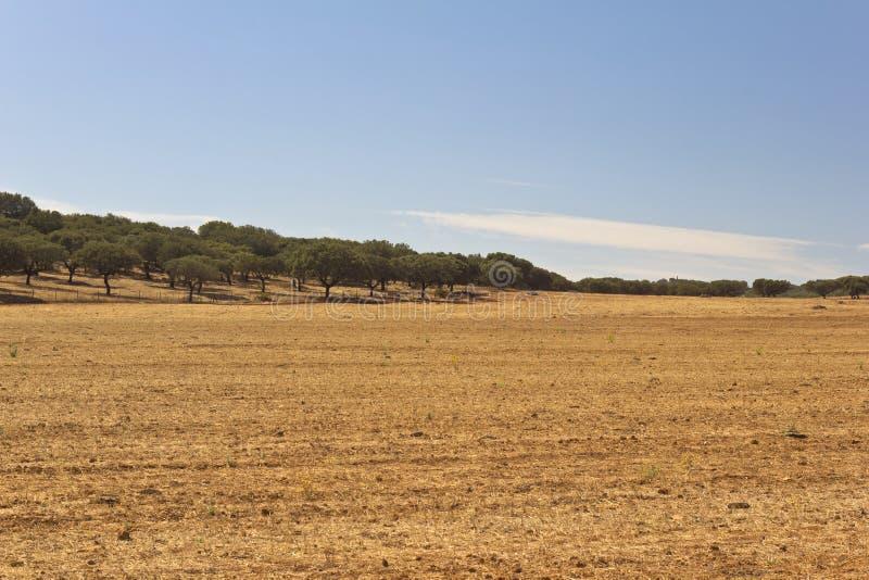 Download Planície de Golded foto de stock. Imagem de fora, agricultural - 29835092
