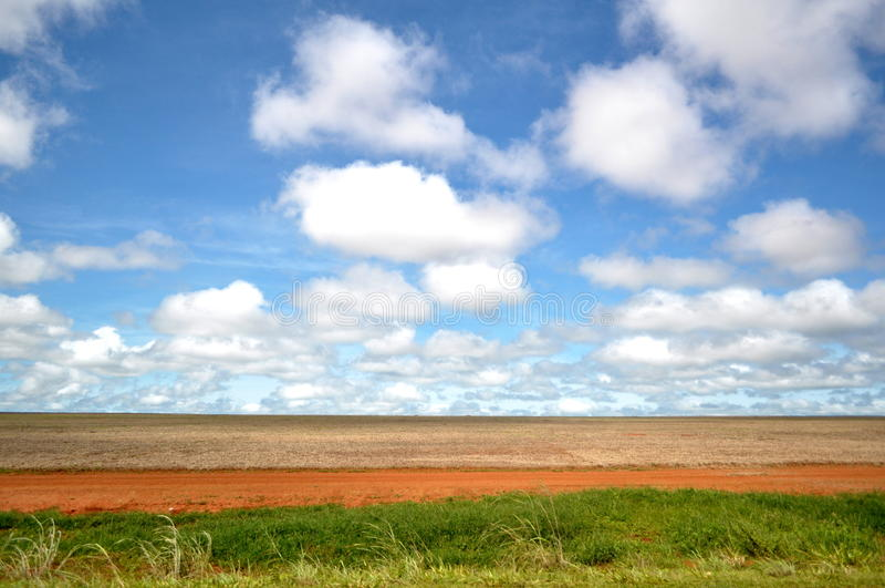 Uma plantação da soja fotografia de stock