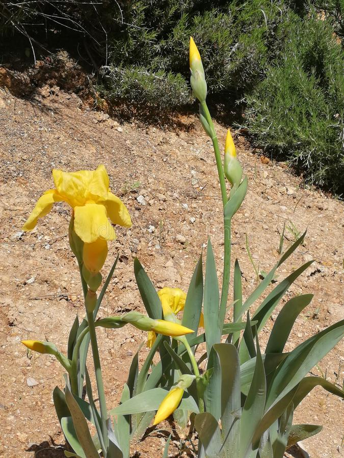 Uma planta com flores amarelas fotos de stock