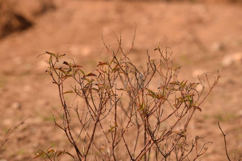 Uma planta da erva-doce com fundo marrom imagens de stock