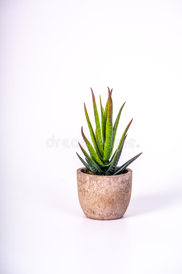 Uma planta de deserto pequena em um potenciômetro de flor feito da madeira fotografia de stock royalty free