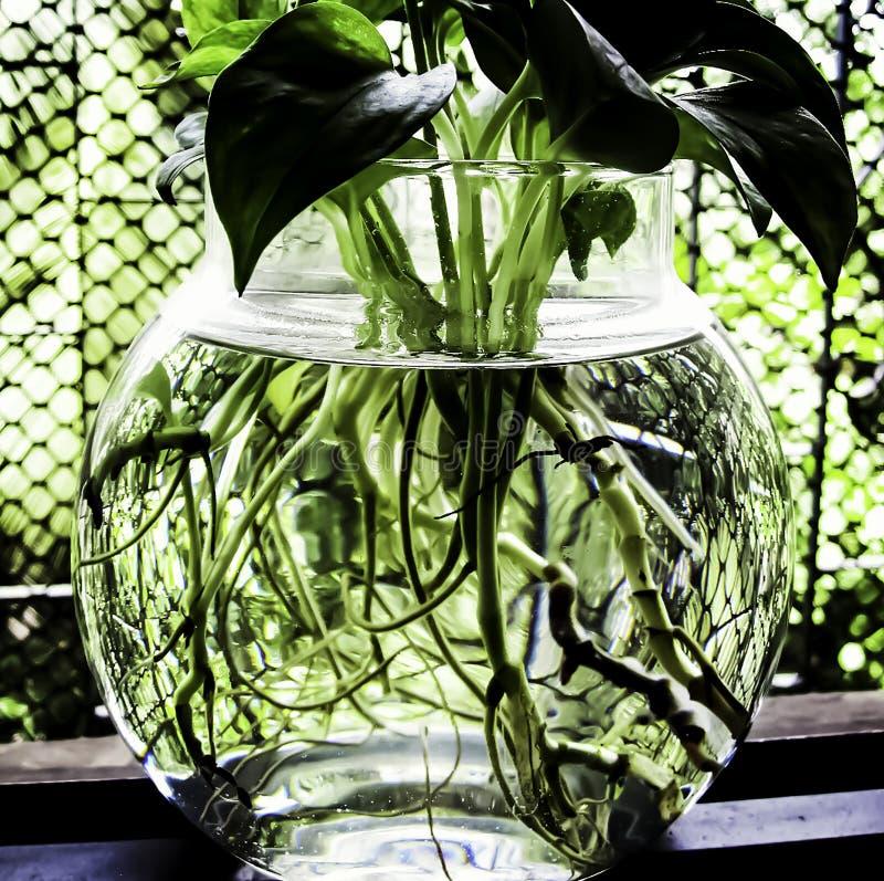 Uma planta e uma água imagens de stock royalty free
