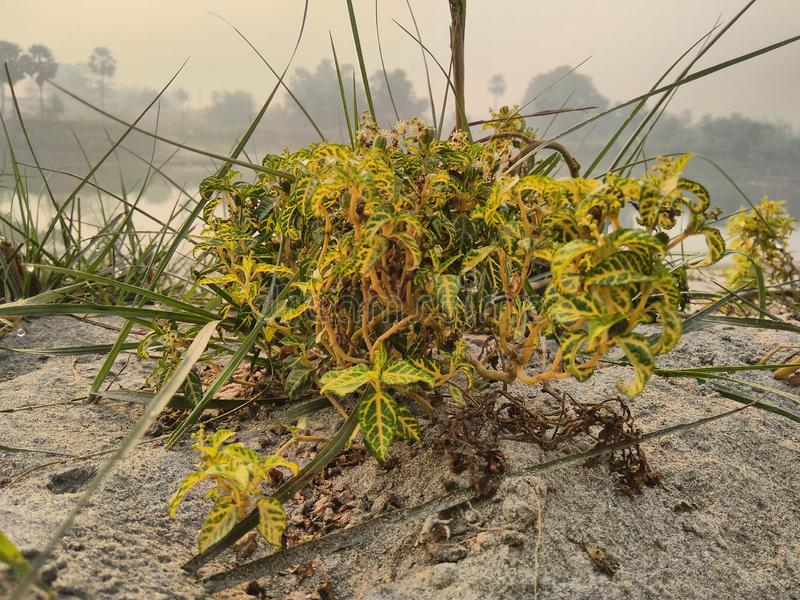 Uma planta na areia no riverbank fotografia de stock royalty free