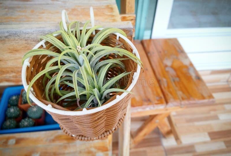 Uma planta pequena em uma cesta pequena foto de stock royalty free