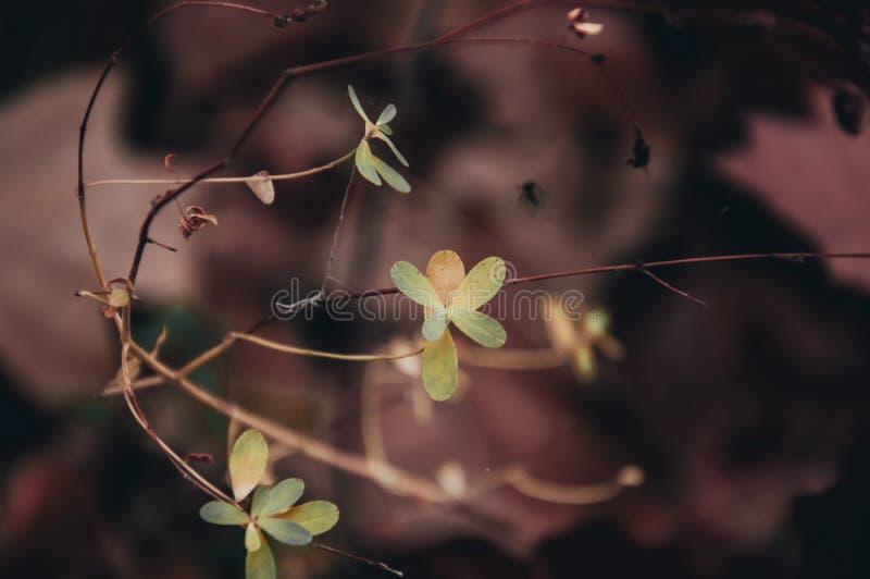Uma planta sob a forma de uma borboleta Fundo vermelho fotografia de stock