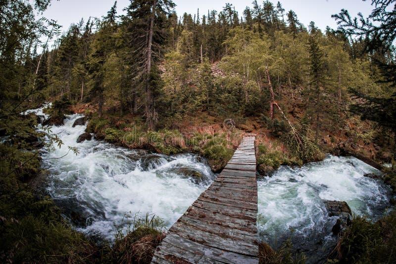 Uma ponte de madeira sobre um córrego rápido da montanha na floresta boreal de Taiga imagem de stock royalty free