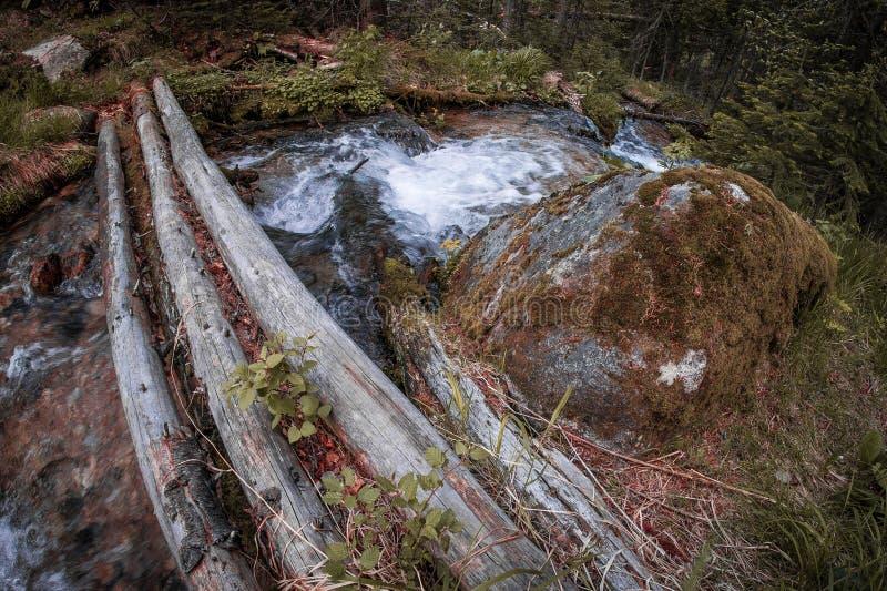 Uma ponte de madeira sobre um córrego rápido da montanha na floresta boreal de Taiga imagens de stock