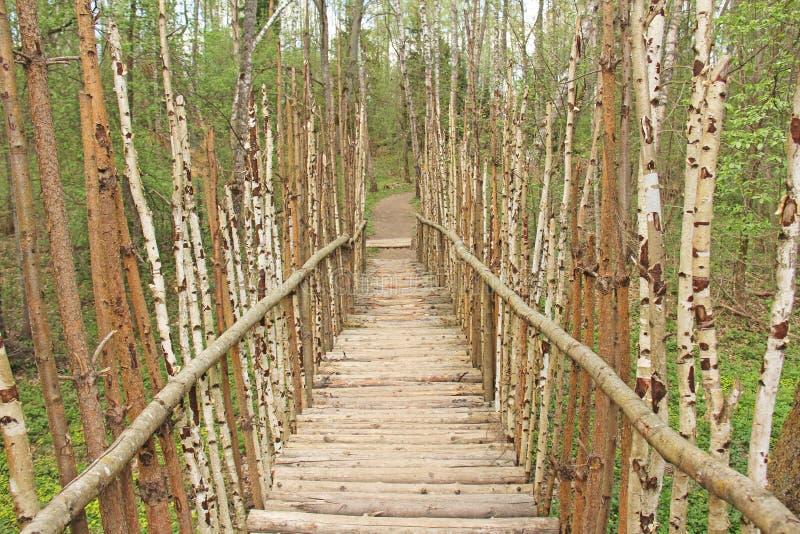 Uma ponte pequena de árvores de vidoeiro reais Art Park Nikola Lenivets, Ru foto de stock