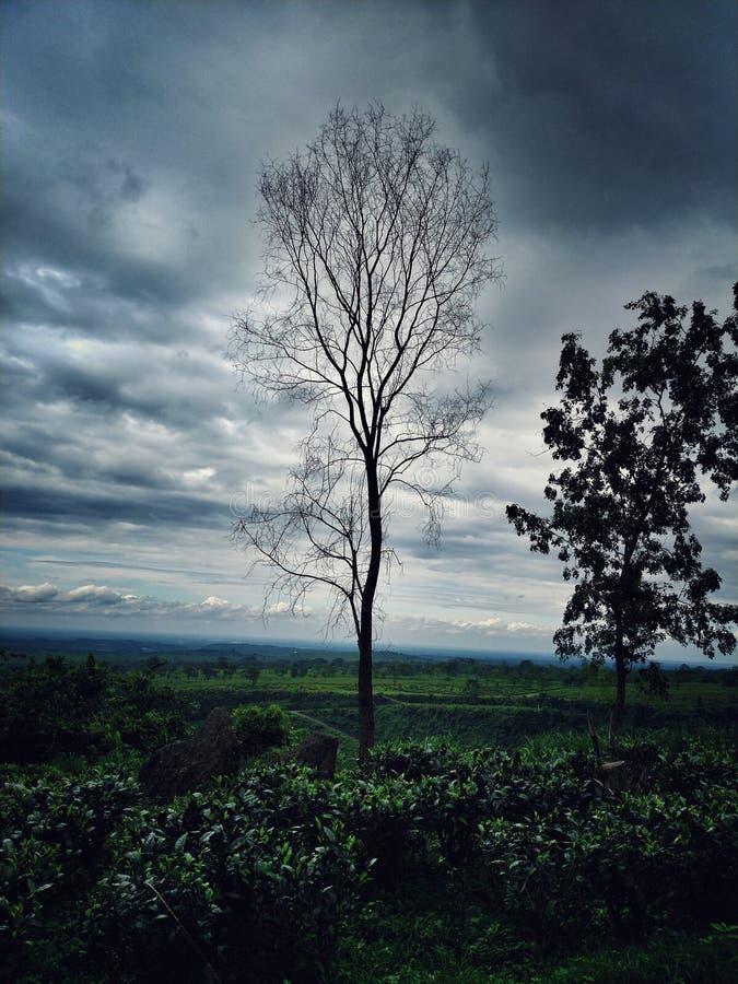 Uma posição inoperante da árvore alta no tapete verde enorme fotografia de stock