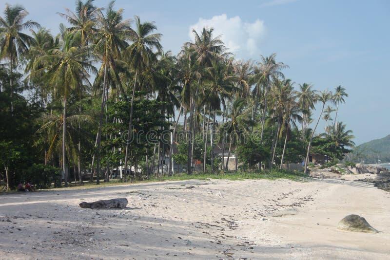 Uma praia com areia e palmas na ilha de Samui em Tailândia imagem de stock royalty free