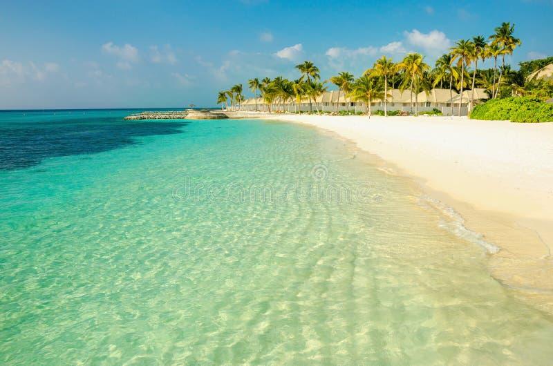 Uma praia exótica arenosa bonita com as palmas de coco altas do nwith imagens de stock