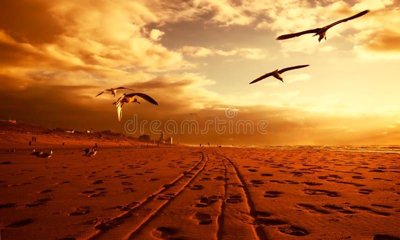 Uma praia no ouro fotos de stock