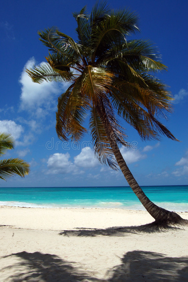 Uma praia tropical com uma palma foto de stock royalty free
