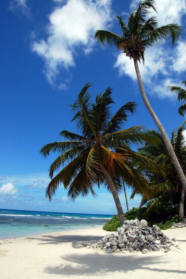 Uma praia tropical com uma palma foto de stock