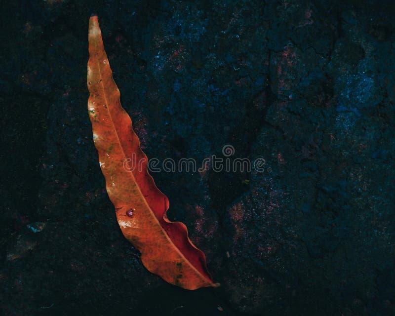 Uma queda amarela da folha na terra após a chuva pesada fotografia de stock royalty free