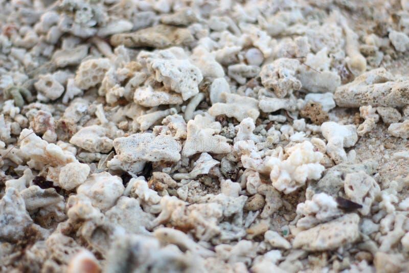 uma rocha coral branca pequena na praia fotografia de stock