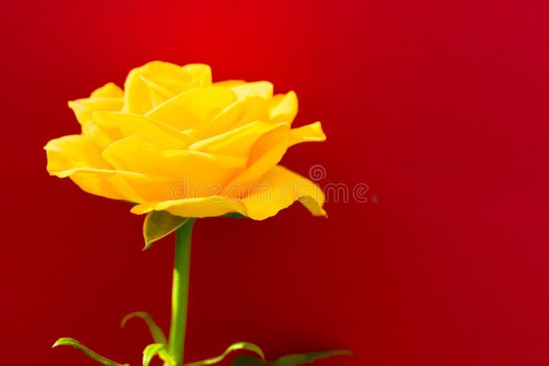 Uma rosa amarela em um fundo vermelho Copie o espa?o imagens de stock