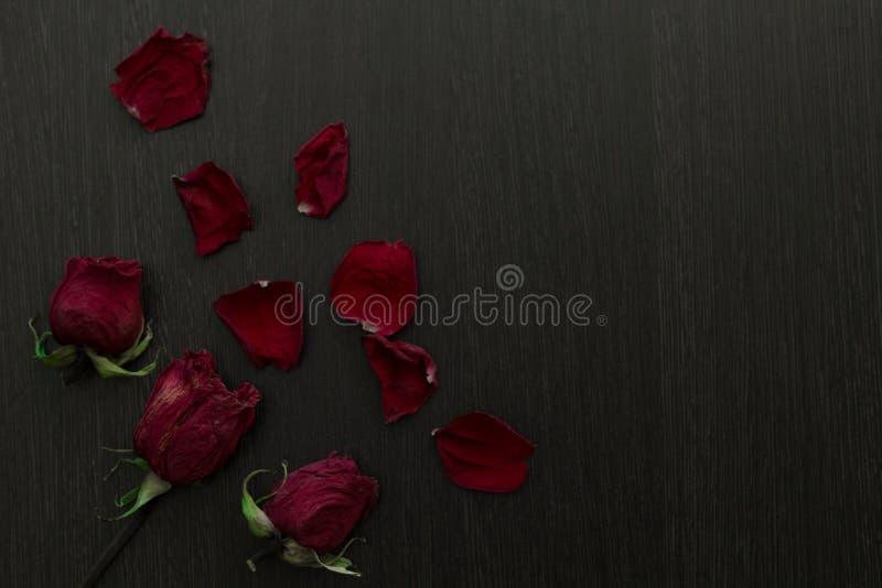 Uma rosa murcho e pétalas do vermelho no fundo preto fotografia de stock
