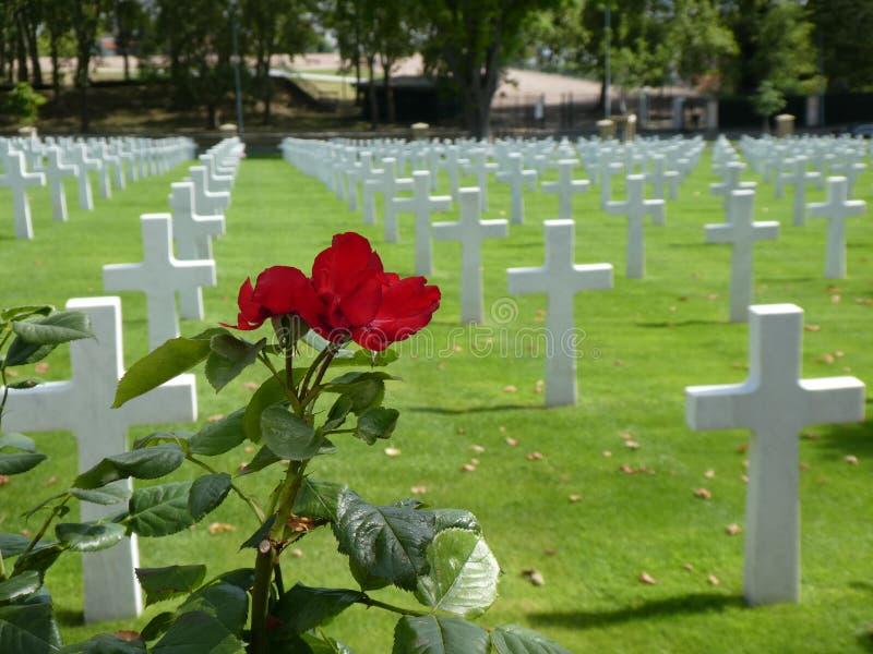 Uma rosa vermelha, com cruzes brancas no fundo em um gramado verde, no cemitério americano em Suresnes, França imagem de stock royalty free