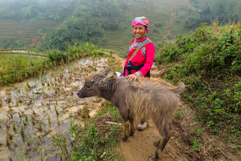 Uma senhora de Hmong com um búfalo do bebê, Sapa, Vietname imagens de stock